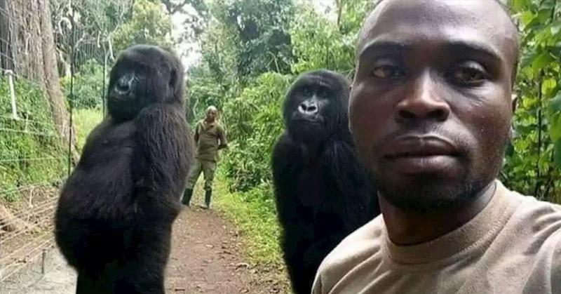 gorilla selfie