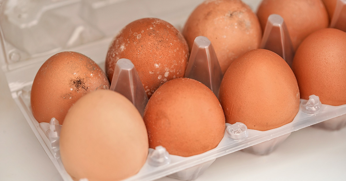 carton of eggs with mild shell defects