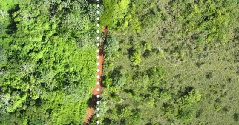 the effect of dumped orange peels on land leading to rejuvenation of vegetation and soil