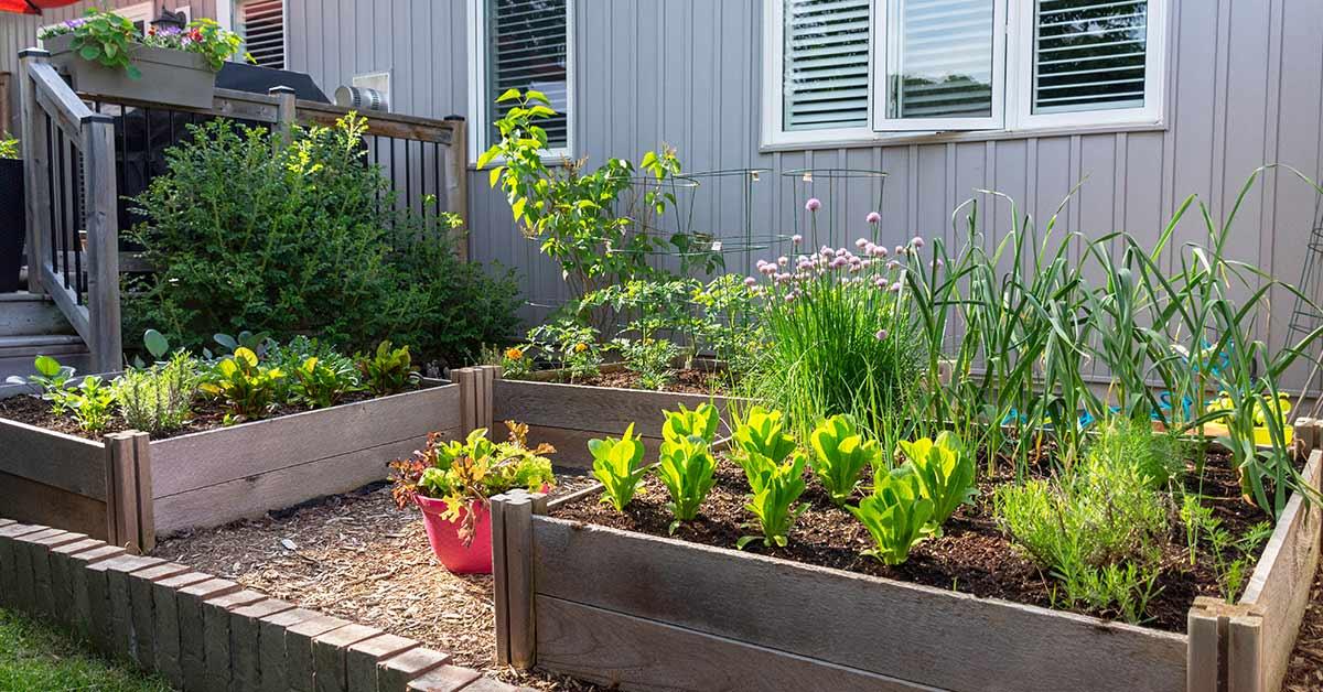 backyard urban garden